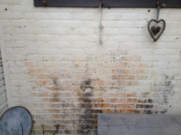 verwijderen schimmel op muur