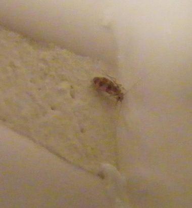 Witte Beestjes In Huis