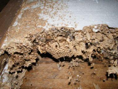 oud bijen wespen nest op zolder. Black Bedroom Furniture Sets. Home Design Ideas