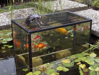 Observatorium in tuinvijver for Vissen vijver