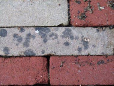 Zwarte vlekken op betonklinkers