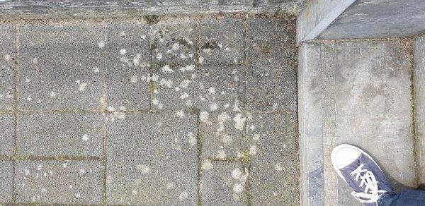 Witte Tegels Tuin.Witte Vlekken Op Tegels Radeloos